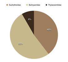 Thylacovovia: Sparassodonta