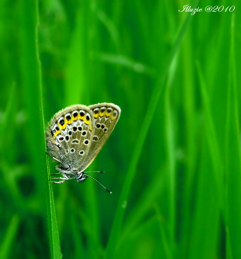 like a butterfly by Illuzie