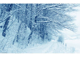 Winter Day by Limaria