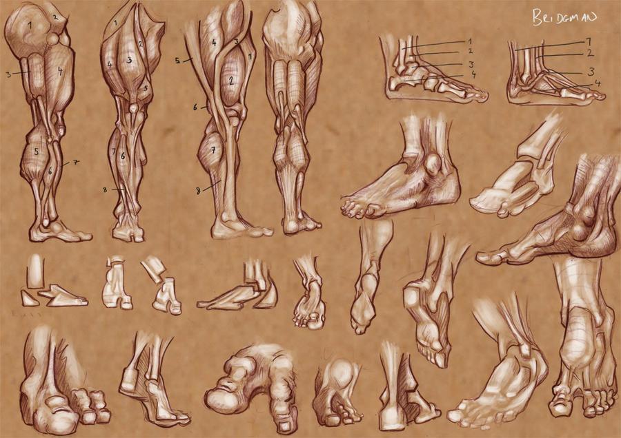 Anatomy of the Foot 1 by Gyzmotnik on DeviantArt