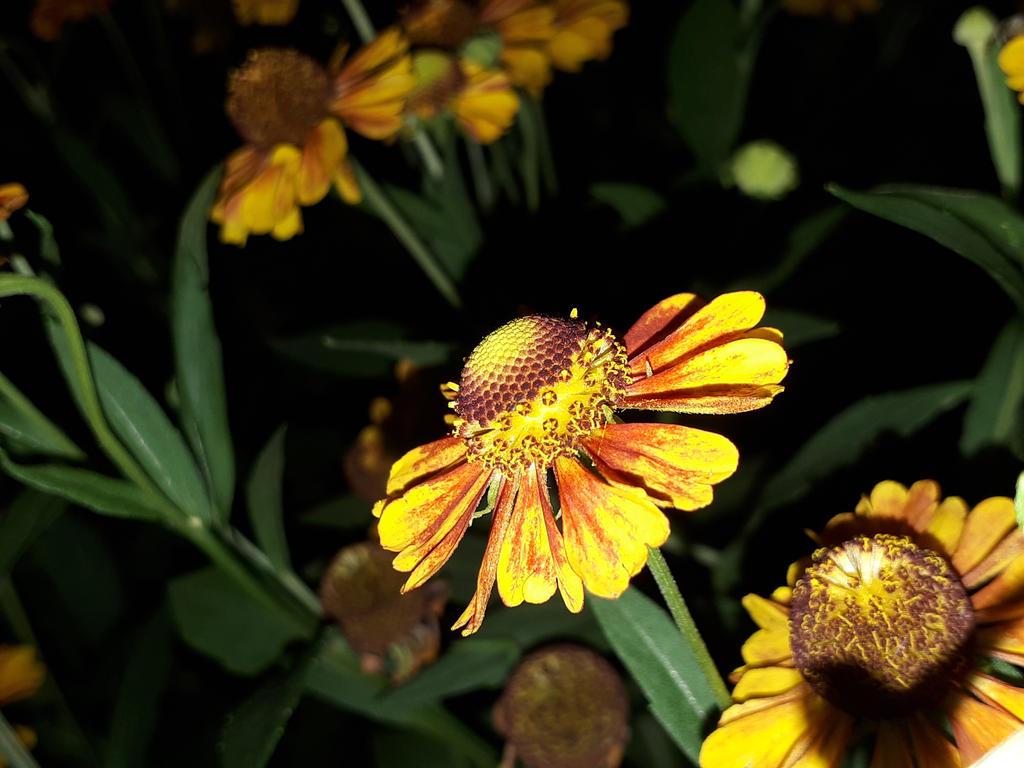 Beautiful flowers in the night 1 1 by renhob27 on deviantart beautiful flowers in the night 1 1 by renhob27 izmirmasajfo