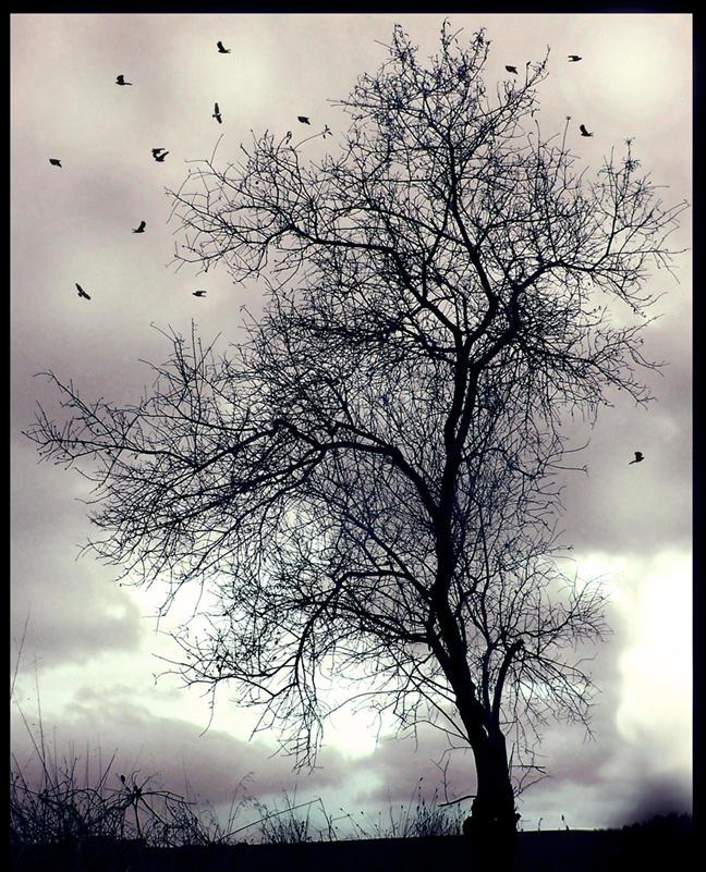 mystic tree by SkyEeZ