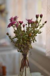 flowers by Luczynka