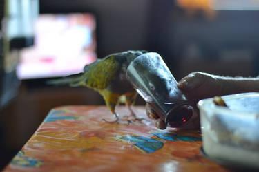 grandpa's parrot by Luczynka