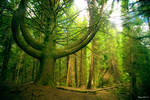 The Seventh Tree