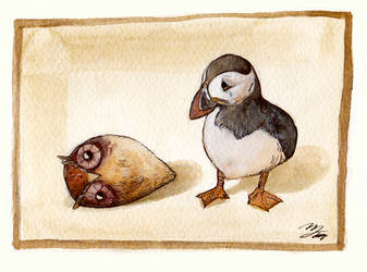 Puffin and Rolling Bird / 2013.10.25 by doming92