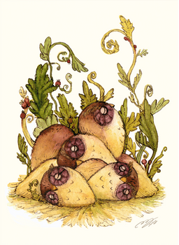 Little Rolling ows / 2014.1.21