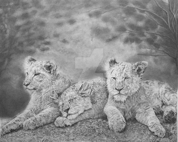 Lion Cubs by CRuschFineArt