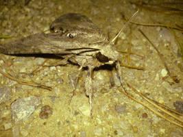 Moth 2 by wodny
