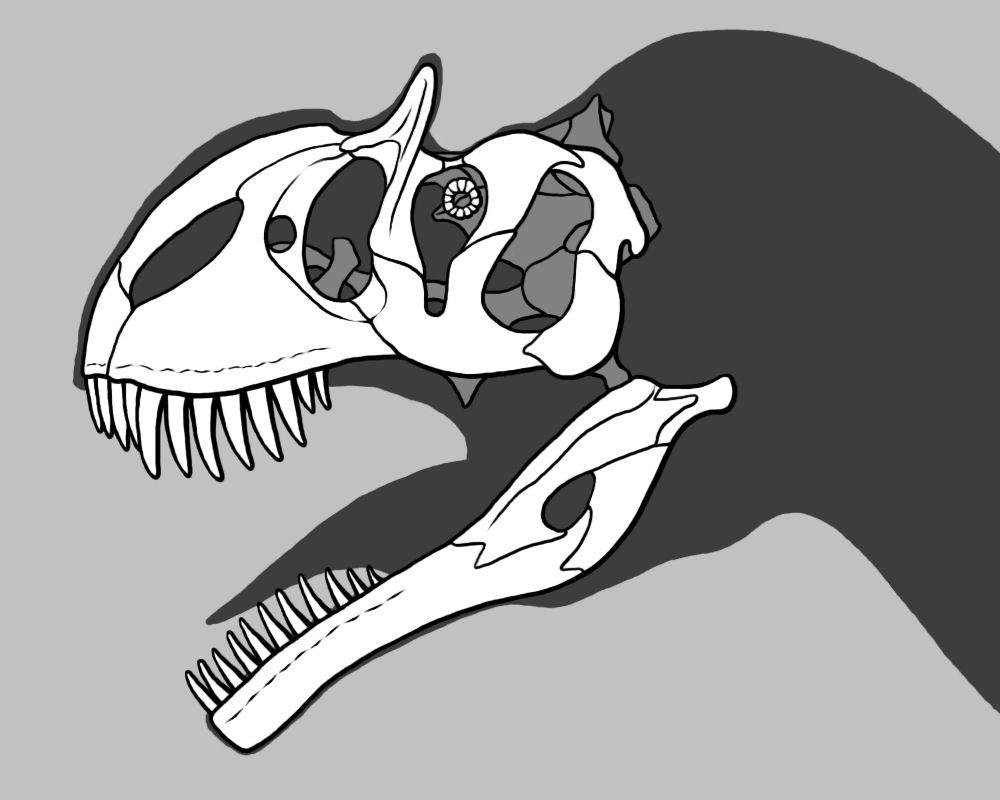 Short-faced Tetanuran Skull by dracontes