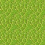 Pattern - Leaf Epidermis by dracontes