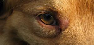 Riva's Eye