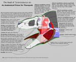 Head of Tyrannosaurus - Anatomy Primer