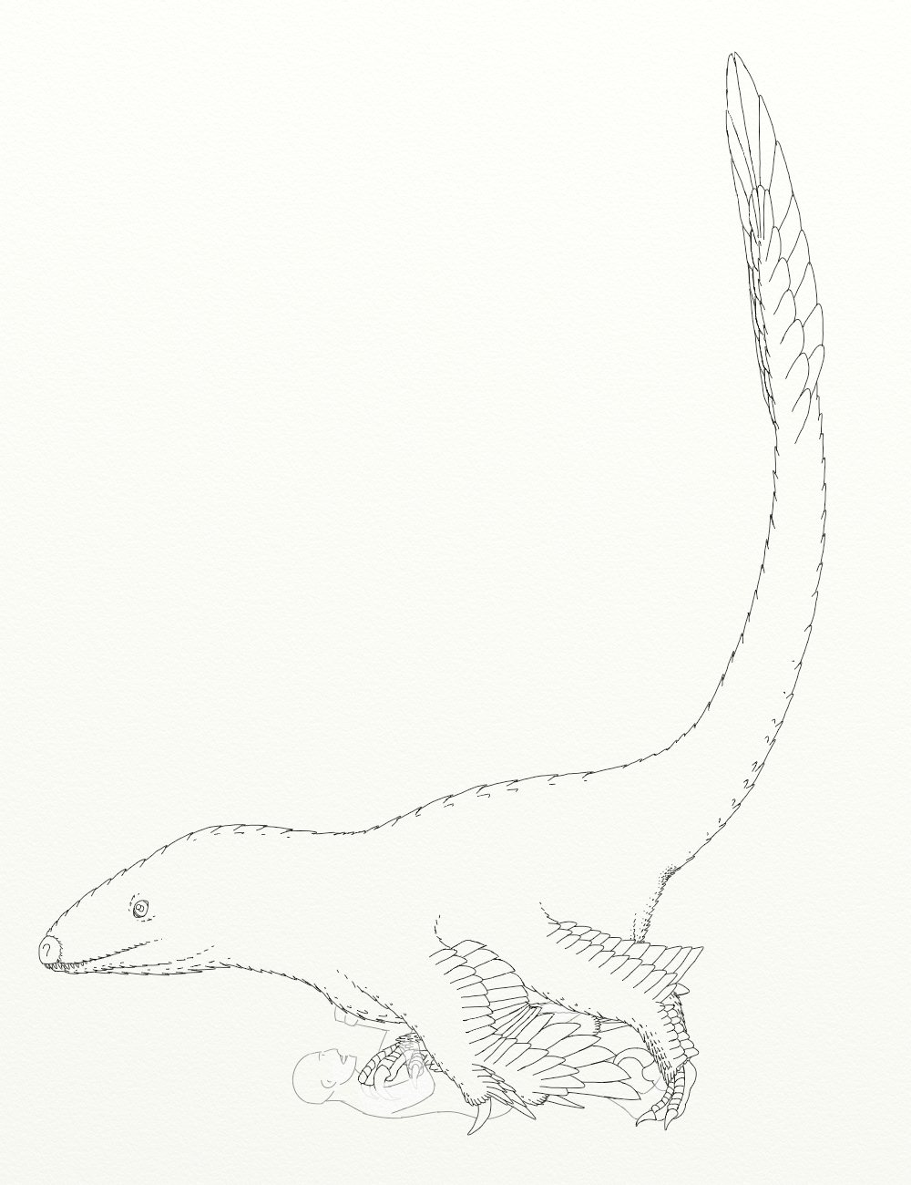 Upset with utahraptor by dracontes on deviantart for Utahraptor coloring page