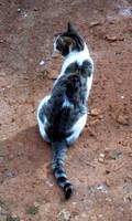 Feline Sinuousness