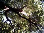 Avocado Grove Canopy 2