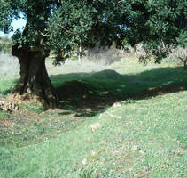View of Barranco dos Aivados 1 by dracontes