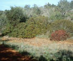 View of Barranco dos Aivados 2 by dracontes