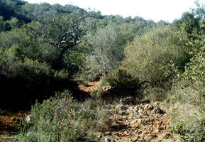 View of Barranco dos Aivados 3 by dracontes