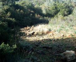 View of Barranco dos Aivados 6 by dracontes