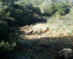 View of Barranco dos Aivados 6