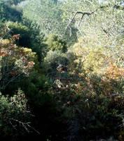 View of Barranco dos Aivados 7 by dracontes