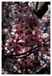 Signs of Spring by blueseas
