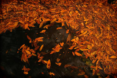 Autumn  Rain by blueseas