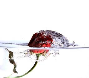 rose by dtobi