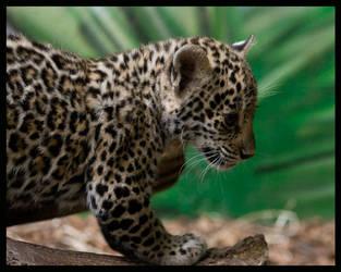 jaguar: daughter of jungle by morho