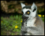 lemur: get mad