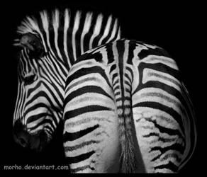 zebra: striped back by morho