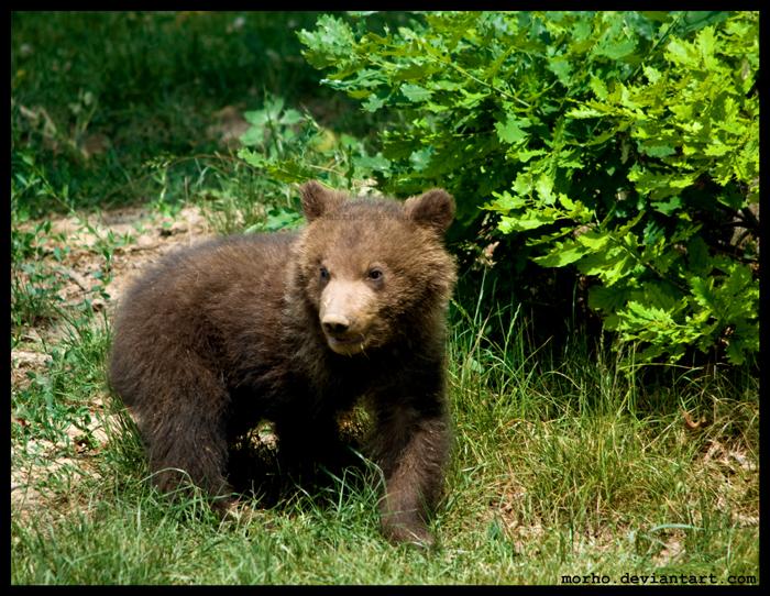 teddy bear by morho