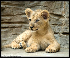 lion cub by morho
