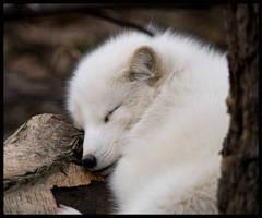 the sleep of innocents