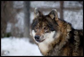 Freya in winter coat by morho