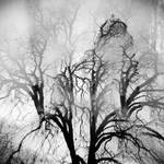 The Tree Whisper Softly