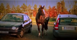 Horse Outside