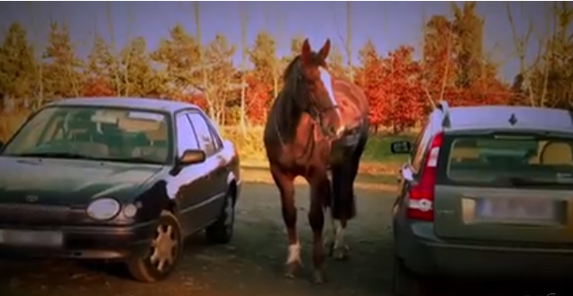 Horse Outside by EddieCHE