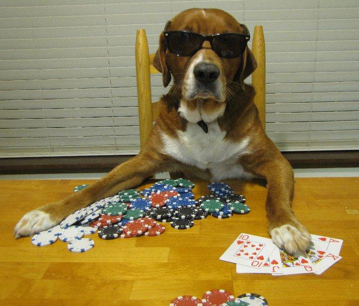 poker dogs