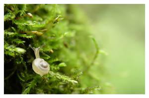 snail by Vondur