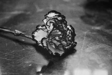 Flower by Ghadi11