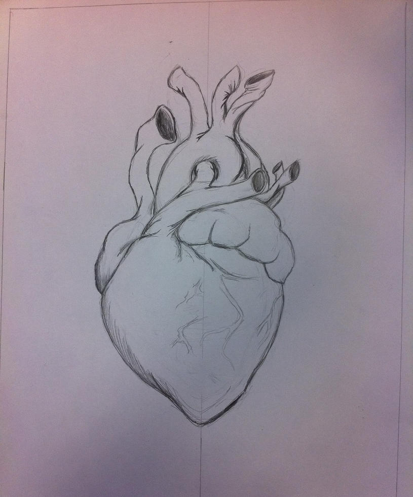Sketch of heart anatomy for Heart break by InvaderPixi on DeviantArt