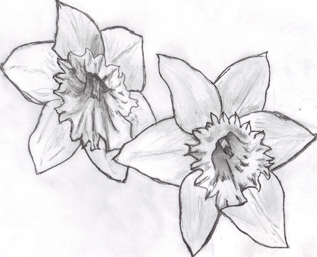 Image Gallery narcissus tattoo drawing