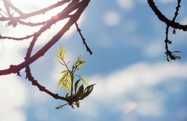 the safe embrace of spring