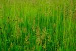 More Grass Area