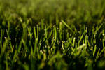 Grass Scene
