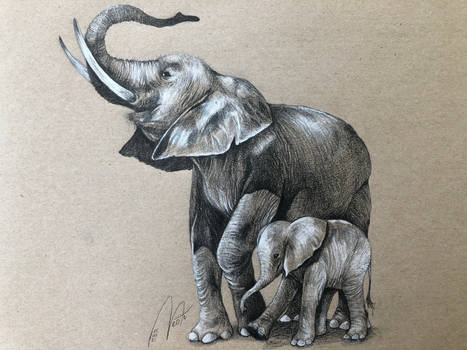 elephants_commission