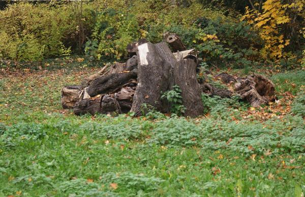 dead wood by heyla-stock