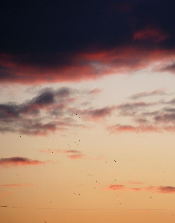 birds in the sky by heyla-stock
